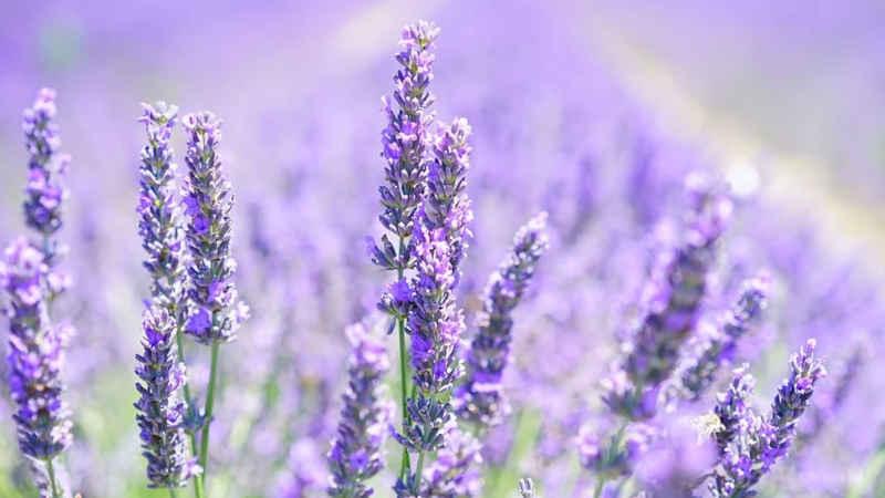 Piante da giardino fiorite